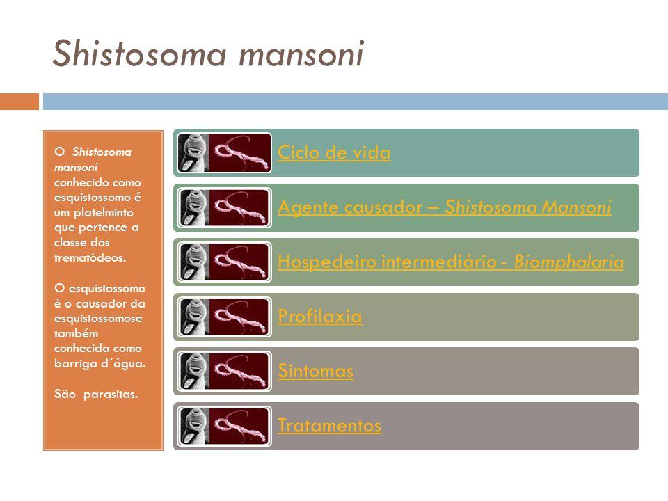 Shistosoma mansoni O Shistosoma mansoni conhecido como esquistossomo é um platelminto que pertence a classe dos trematódeos.