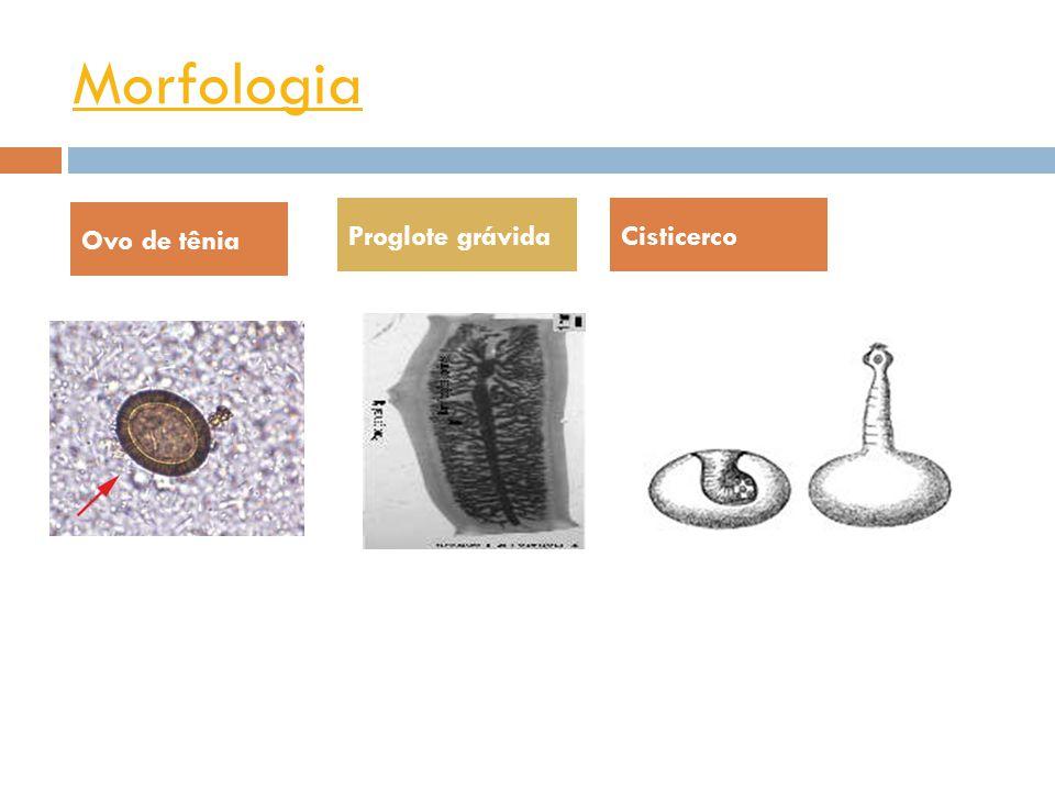 Morfologia Ovo de tênia Proglote grávida Cisticerco