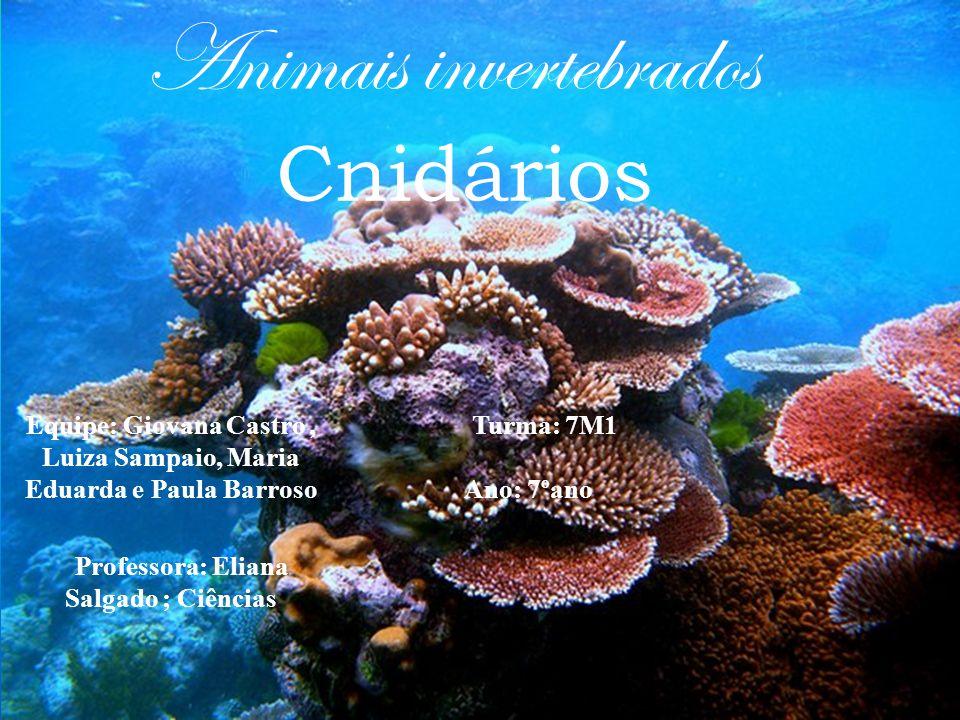 Cnidários Animais invertebrados
