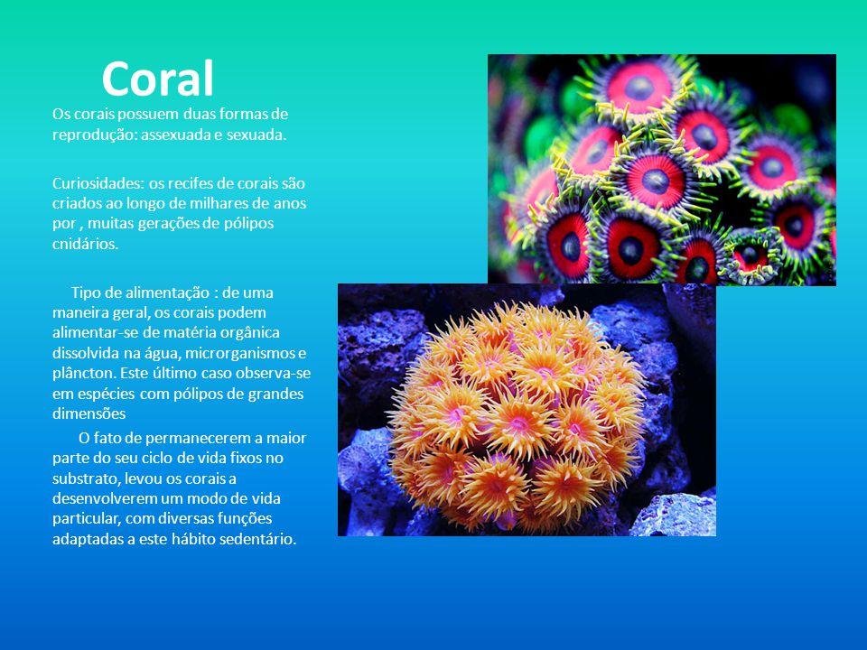 Coral Os corais possuem duas formas de reprodução: assexuada e sexuada.