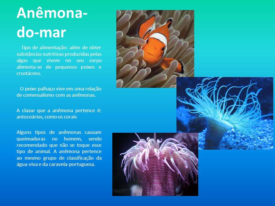 Anêmona- do-mar