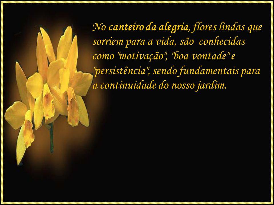 No canteiro da alegria, flores lindas que sorriem para a vida, são conhecidas como motivação , boa vontade e persistência , sendo fundamentais para a continuidade do nosso jardim.
