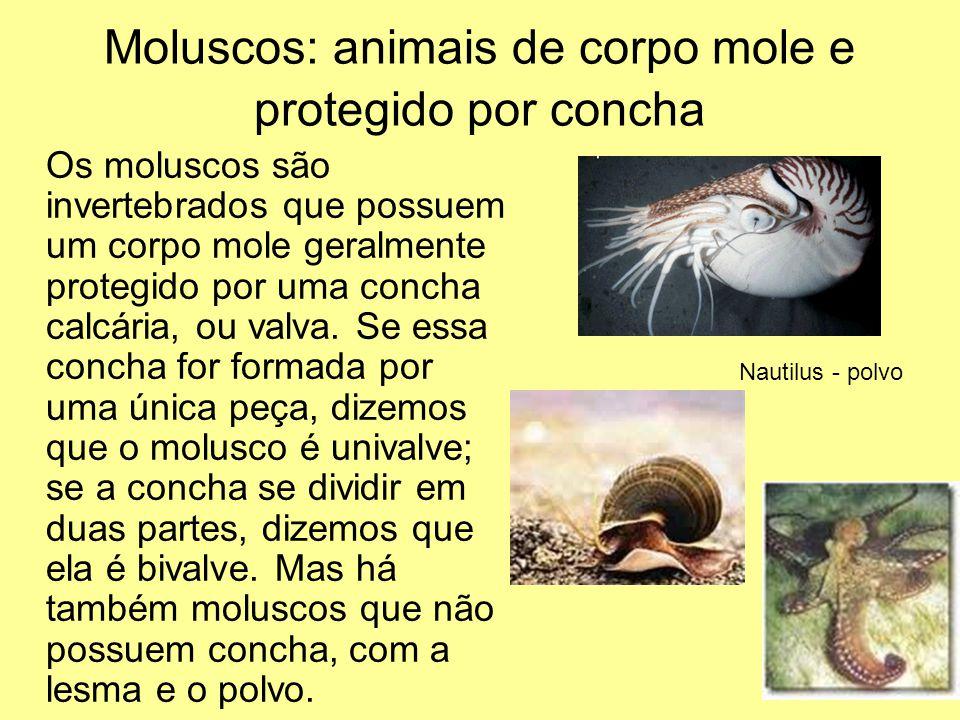 Moluscos: animais de corpo mole e protegido por concha
