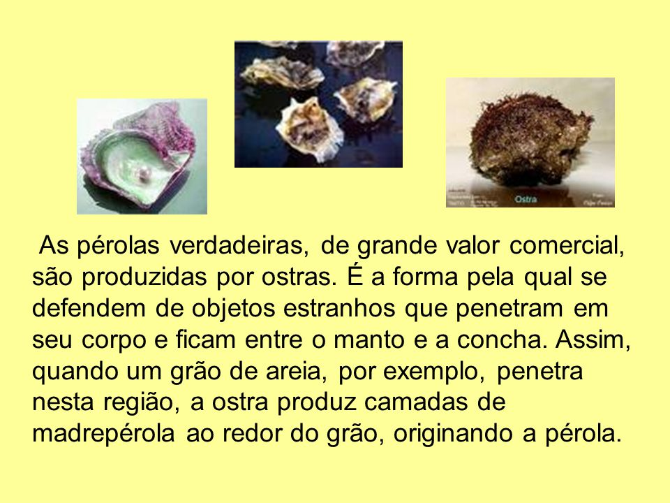 As pérolas verdadeiras, de grande valor comercial, são produzidas por ostras.