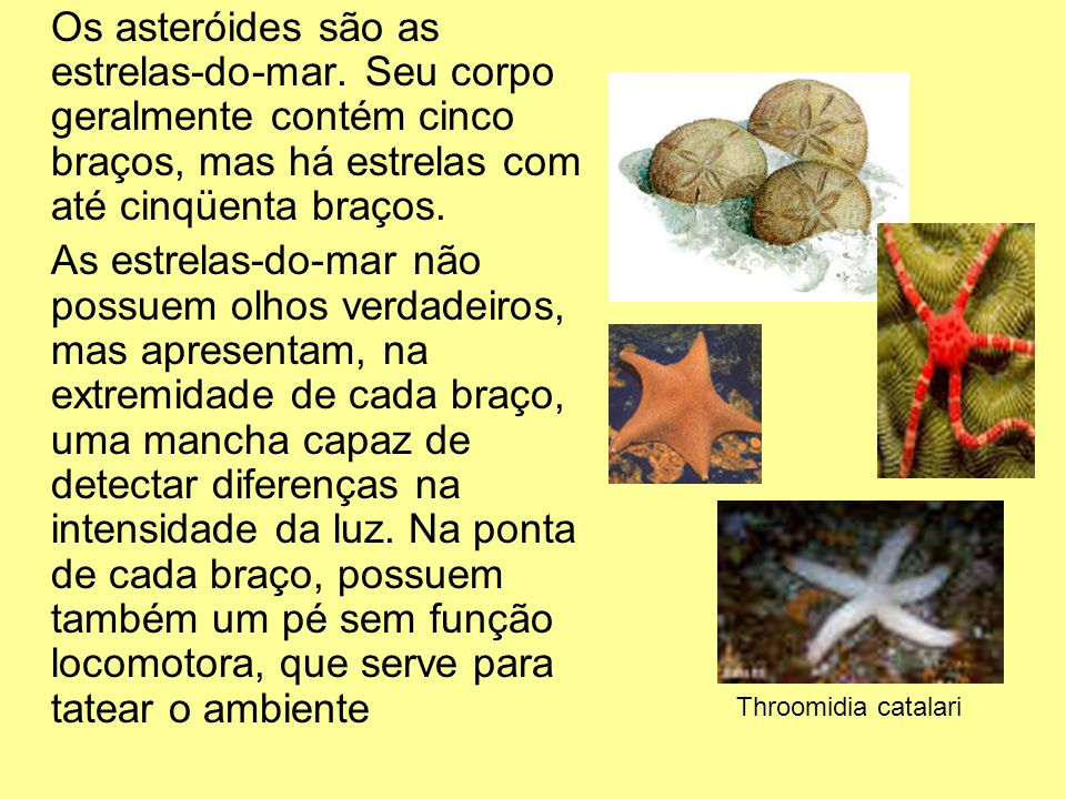 Os asteróides são as estrelas-do-mar