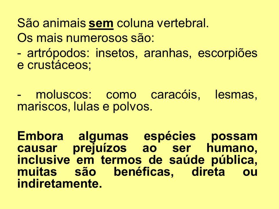 São animais sem coluna vertebral.
