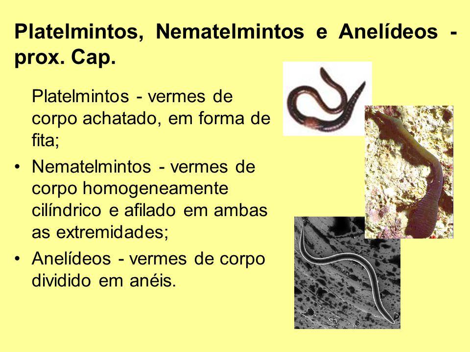 Platelmintos, Nematelmintos e Anelídeos - prox. Cap.