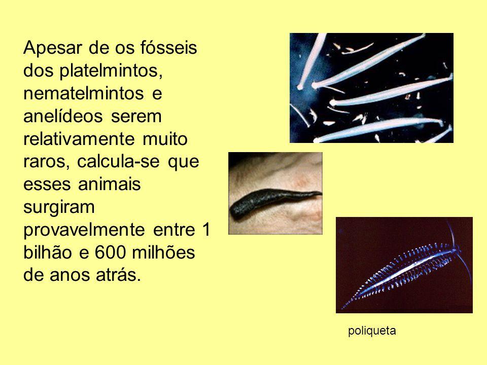 Apesar de os fósseis dos platelmintos, nematelmintos e anelídeos serem relativamente muito raros, calcula-se que esses animais surgiram provavelmente entre 1 bilhão e 600 milhões de anos atrás.