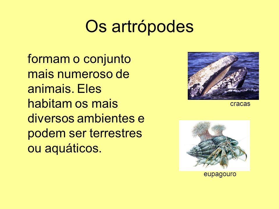 Os artrópodes formam o conjunto mais numeroso de animais. Eles habitam os mais diversos ambientes e podem ser terrestres ou aquáticos.