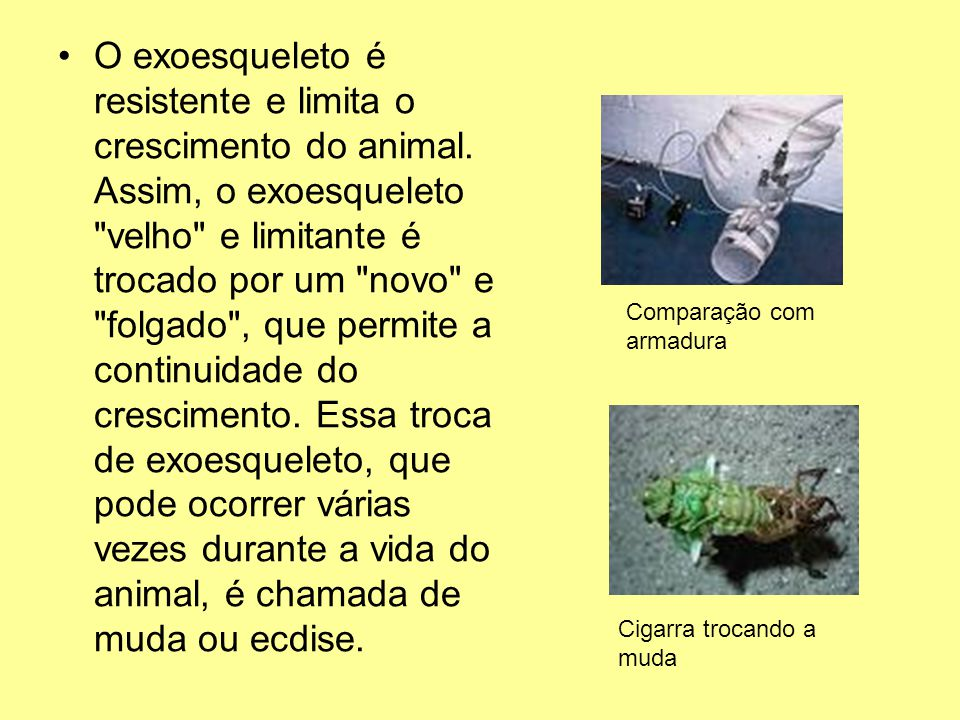 O exoesqueleto é resistente e limita o crescimento do animal