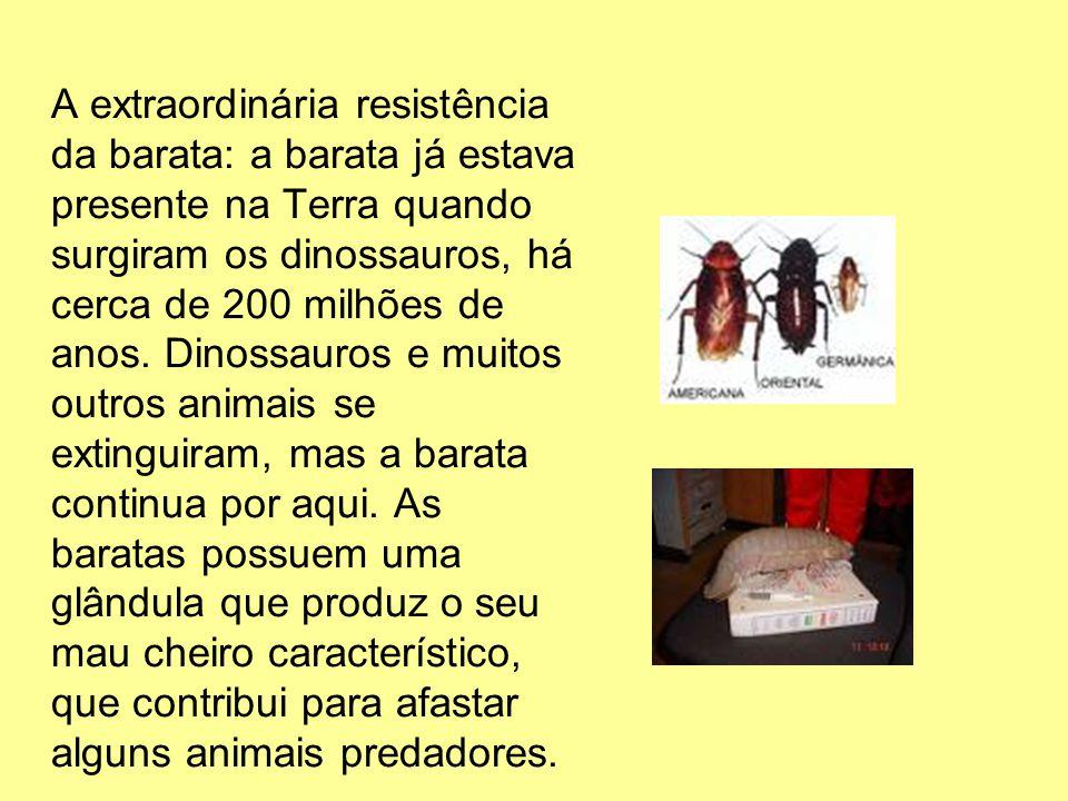A extraordinária resistência da barata: a barata já estava presente na Terra quando surgiram os dinossauros, há cerca de 200 milhões de anos.