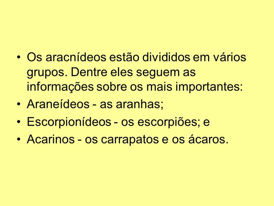 Os aracnídeos estão divididos em vários grupos