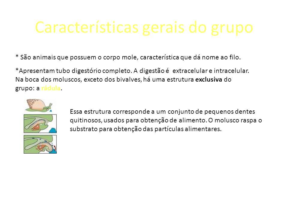 Características gerais do grupo