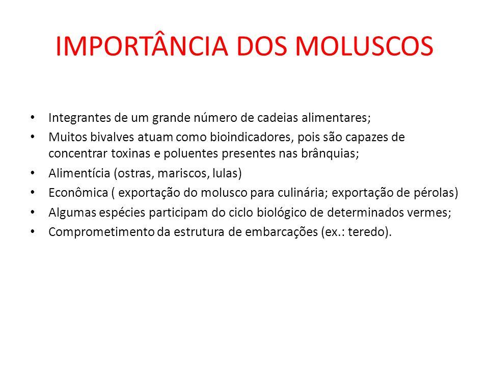 IMPORTÂNCIA DOS MOLUSCOS