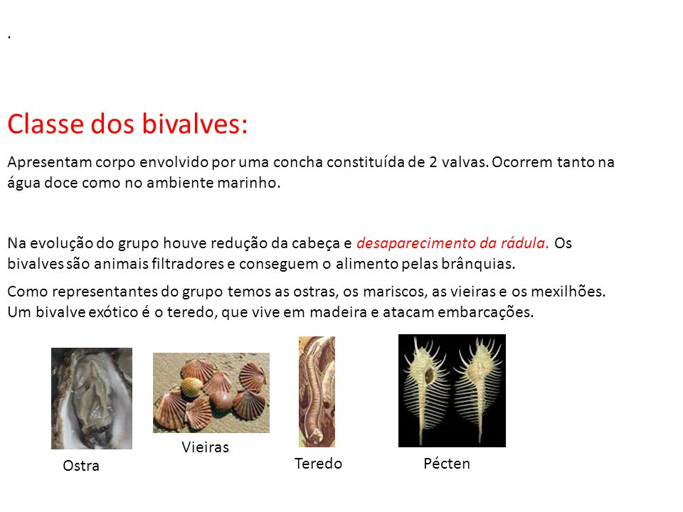 . Classe dos bivalves: Apresentam corpo envolvido por uma concha constituída de 2 valvas. Ocorrem tanto na água doce como no ambiente marinho.