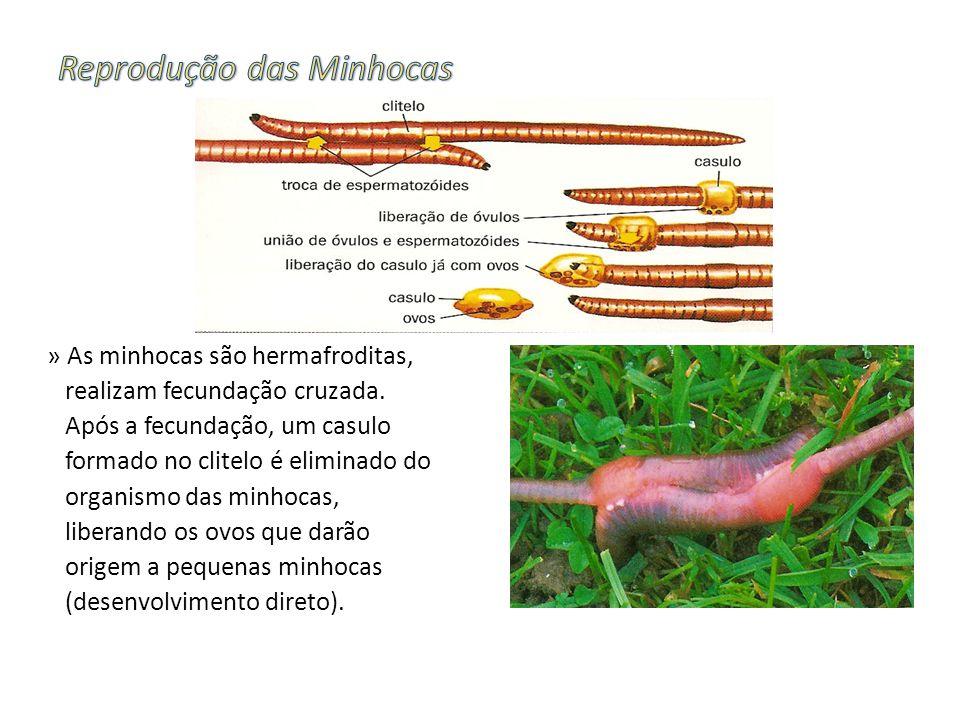 Reprodução das Minhocas