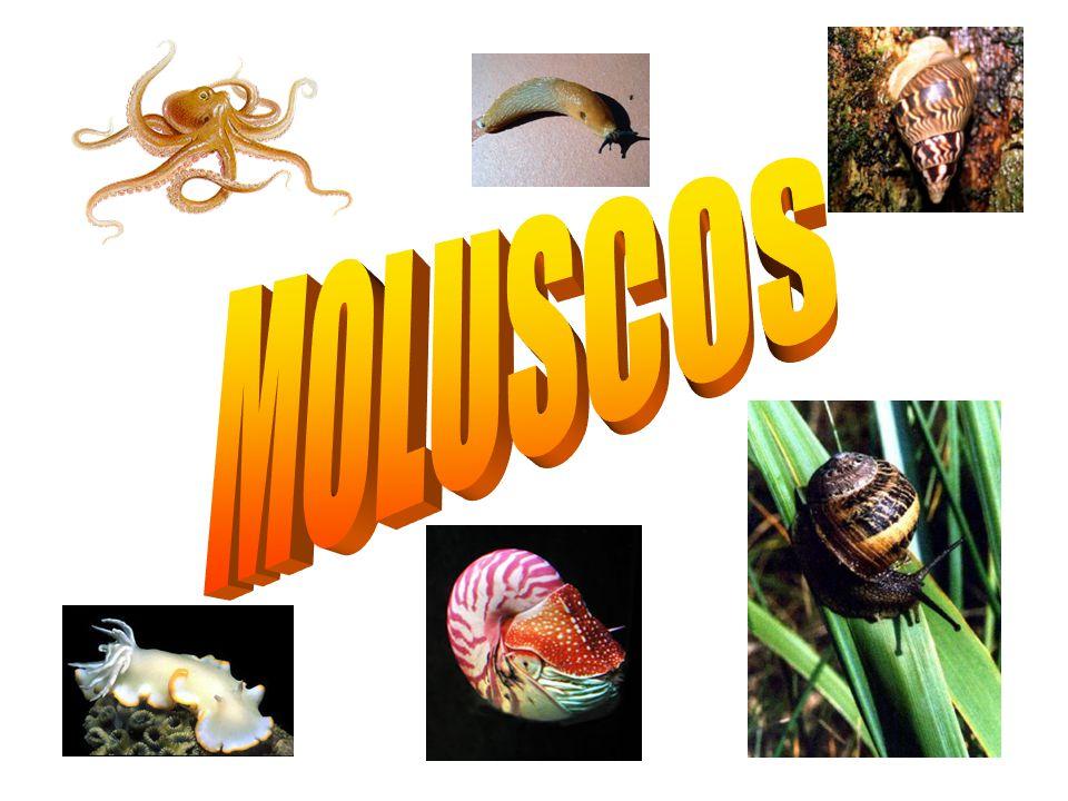 MOLUSCOS.
