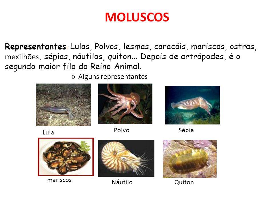 MOLUSCOS