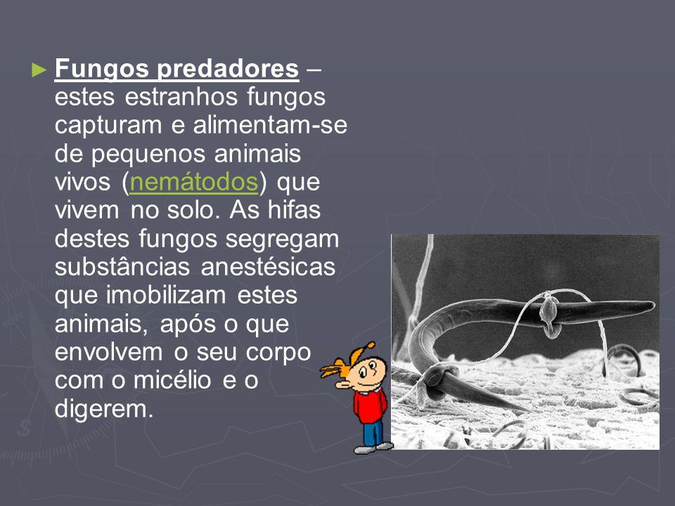Fungos predadores – estes estranhos fungos capturam e alimentam-se de pequenos animais vivos (nemátodos) que vivem no solo.
