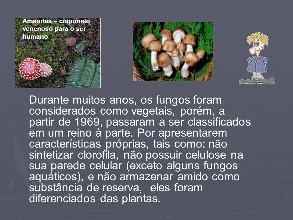 Amanitas – cogumelo venenoso para o ser humano