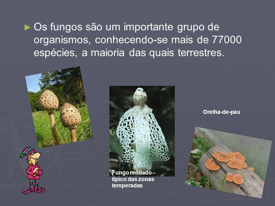 Os fungos são um importante grupo de organismos, conhecendo-se mais de 77000 espécies, a maioria das quais terrestres.