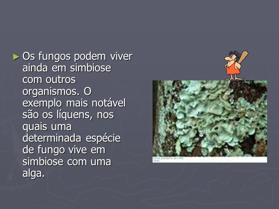 Os fungos podem viver ainda em simbiose com outros organismos