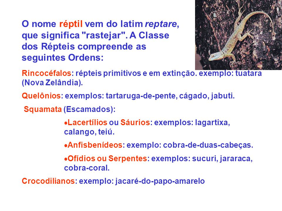 O nome réptil vem do latim reptare, que significa rastejar
