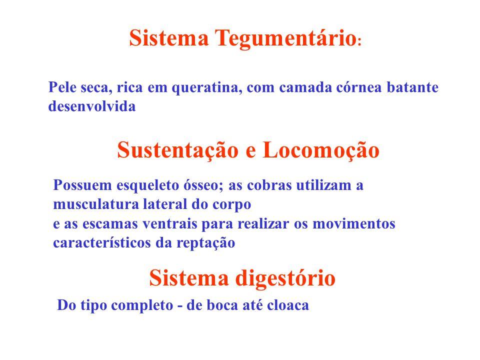 Sistema Tegumentário: