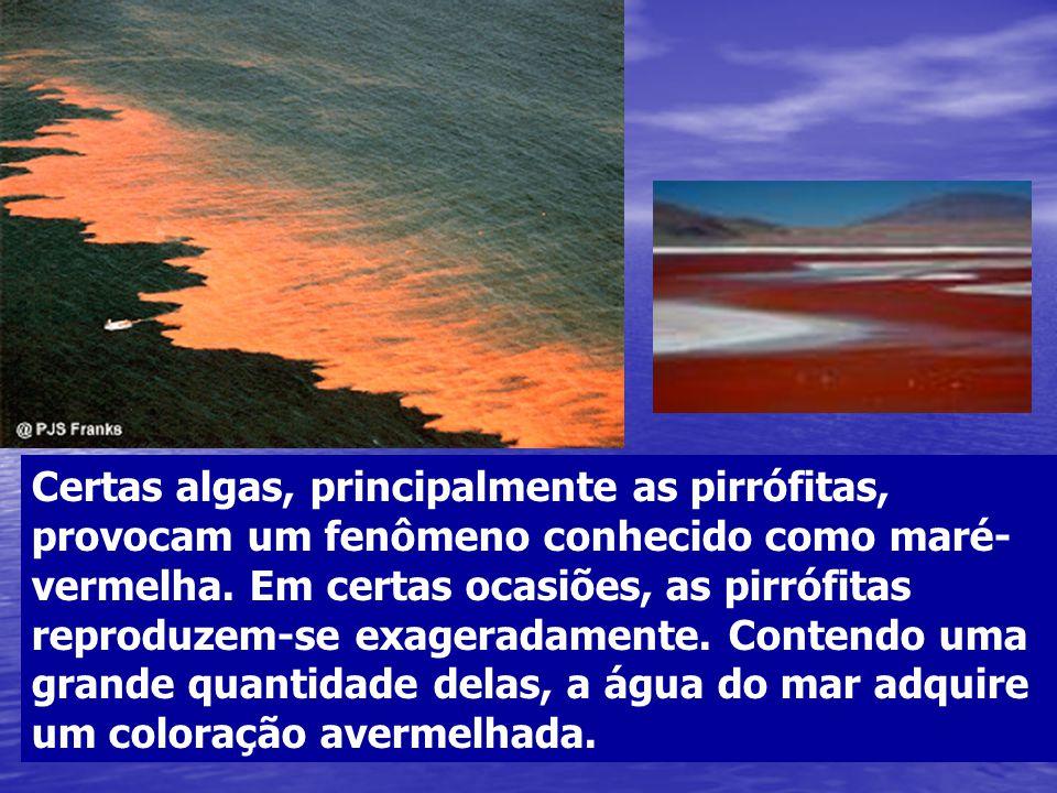Certas algas, principalmente as pirrófitas, provocam um fenômeno conhecido como maré-vermelha.
