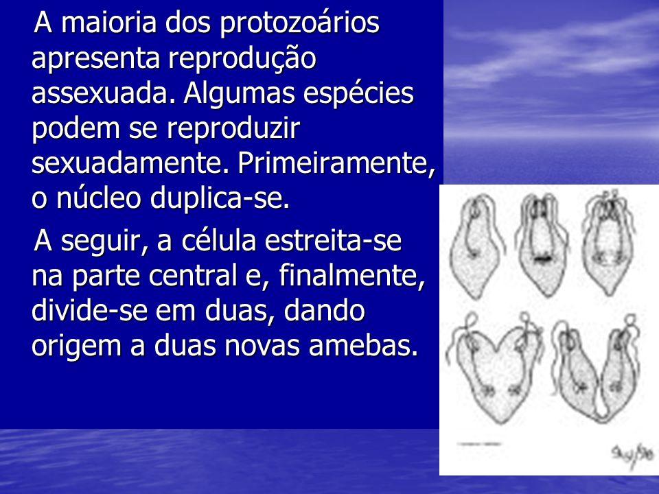 A maioria dos protozoários apresenta reprodução assexuada