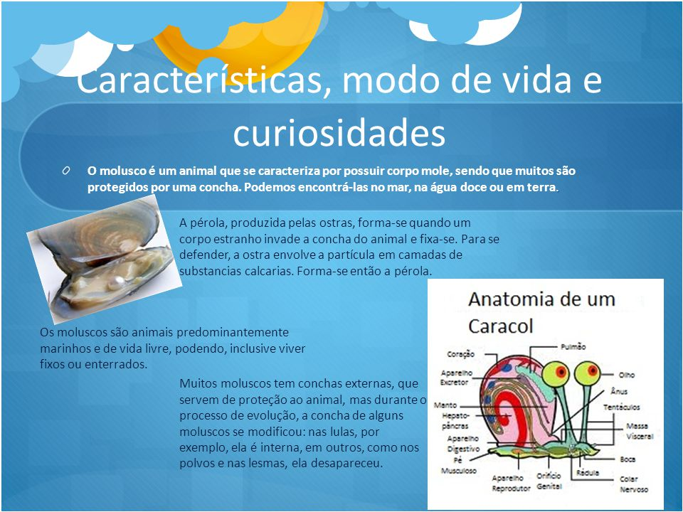 Características, modo de vida e curiosidades