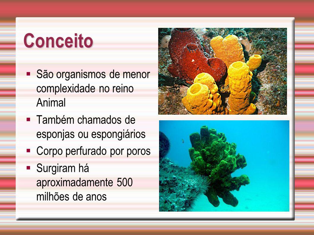 Conceito São organismos de menor complexidade no reino Animal