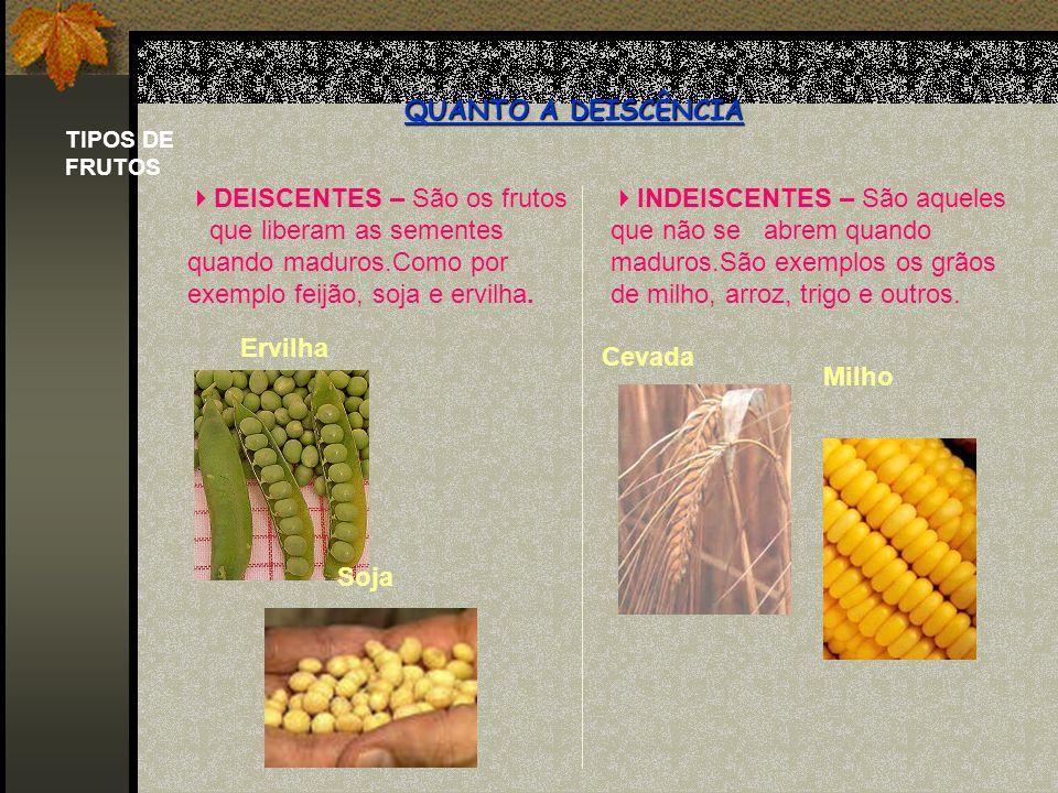 TIPOS DE FRUTOS QUANTO A DEISCÊNCIA DEISCENTES – São os frutos