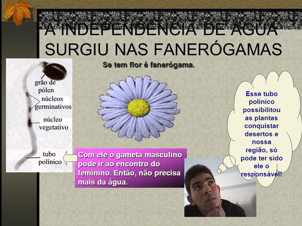 A INDEPENDÊNCIA DE ÁGUA SURGIU NAS FANERÓGAMAS