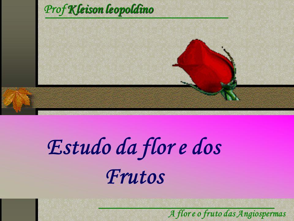 Estudo da flor e dos Frutos