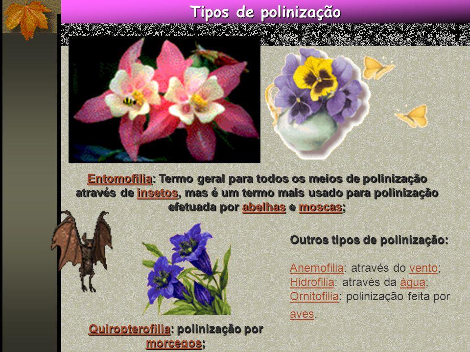 Quiropterofilia: polinização por morcegos;