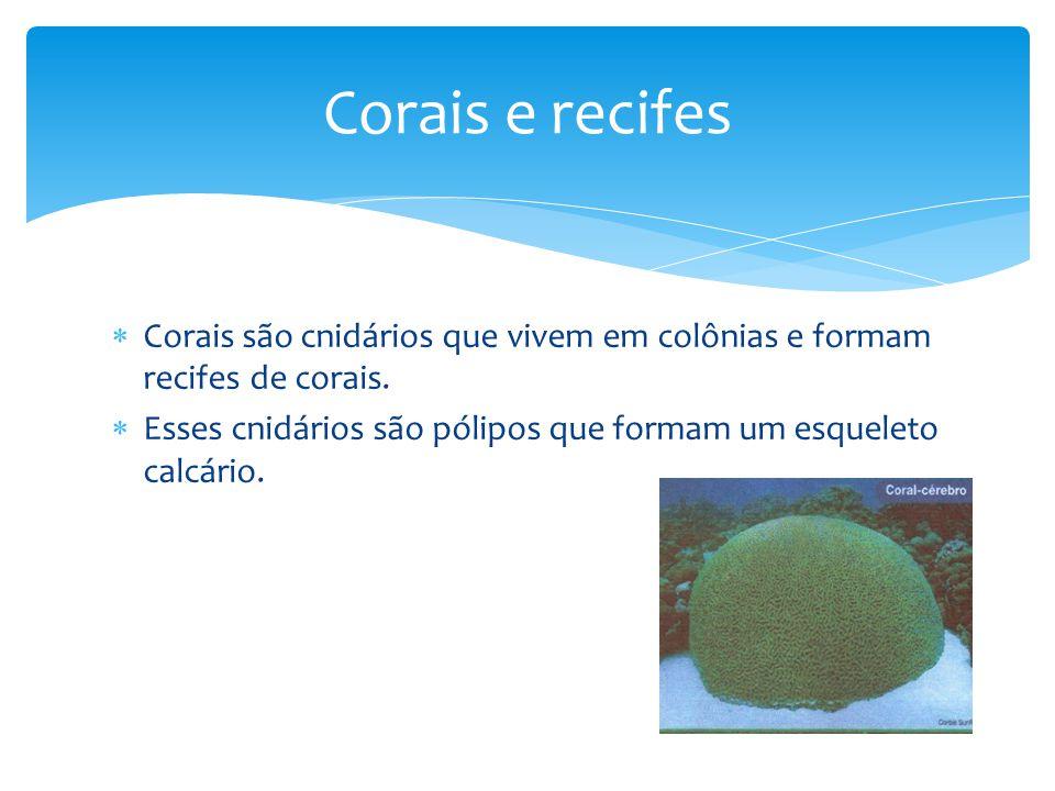 Corais e recifes Corais são cnidários que vivem em colônias e formam recifes de corais.