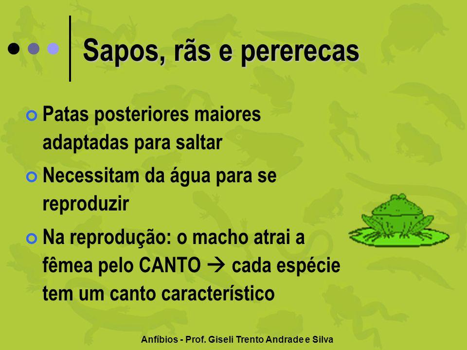 Anfíbios - Prof. Giseli Trento Andrade e Silva