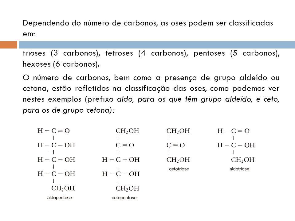 Dependendo do número de carbonos, as oses podem ser classificadas em: trioses (3 carbonos), tetroses (4 carbonos), pentoses (5 carbonos), hexoses (6 carbonos).