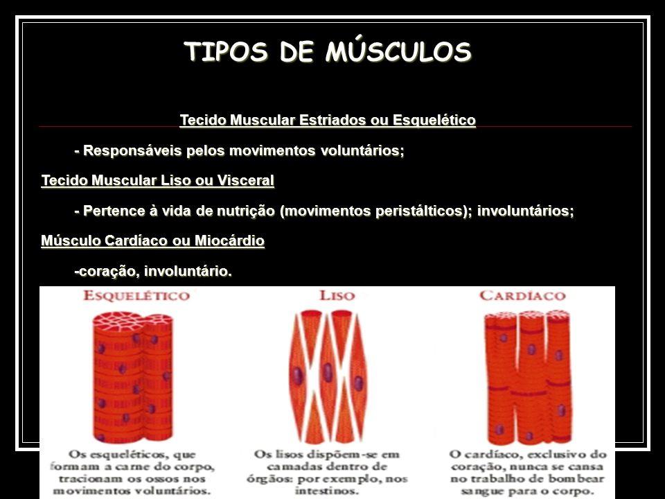 Tecido Muscular Estriados ou Esquelético