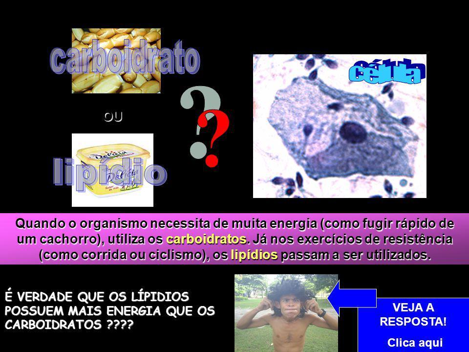 carboidrato célula lipídio OU
