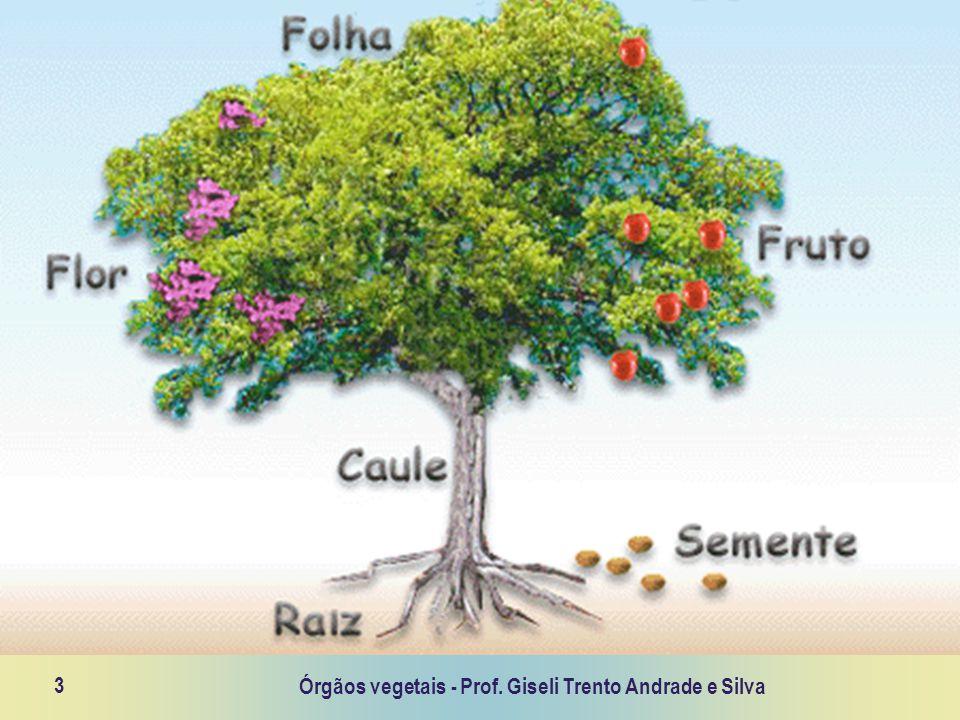 Órgãos vegetais - Prof. Giseli Trento Andrade e Silva