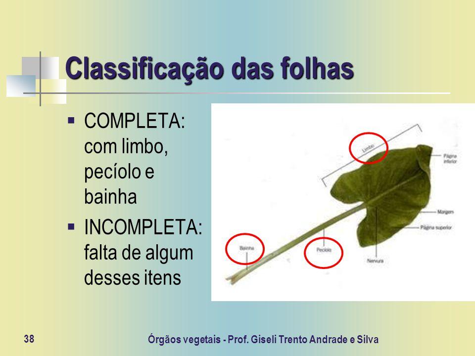 Classificação das folhas