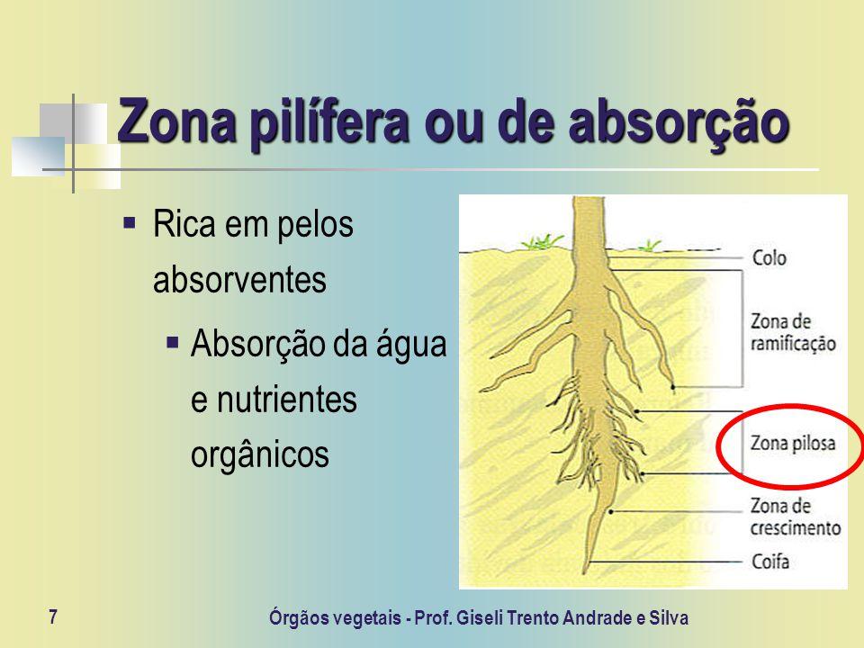 Zona pilífera ou de absorção