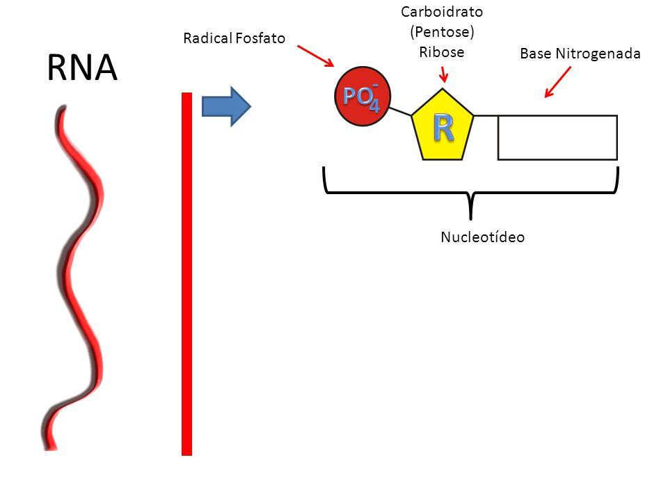 RNA R PO - 4 Carboidrato (Pentose) Ribose Radical Fosfato