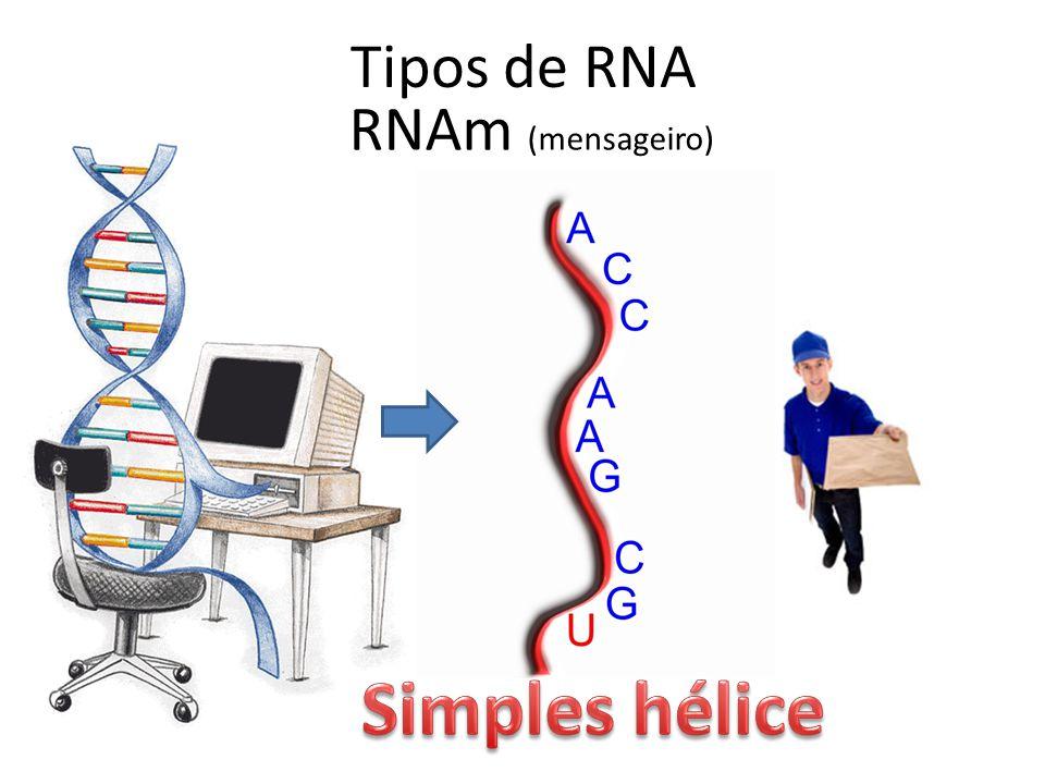 Tipos de RNA RNAm (mensageiro) Simples hélice
