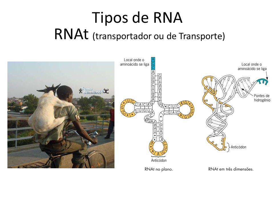 RNAt (transportador ou de Transporte)
