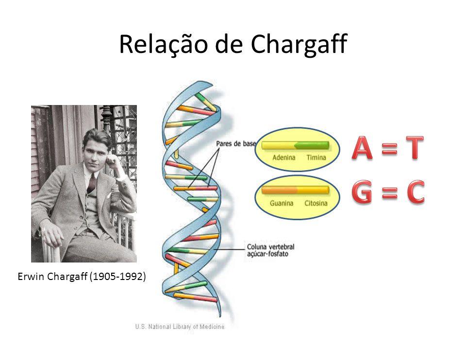 Relação de Chargaff A = T G = C Erwin Chargaff (1905-1992)