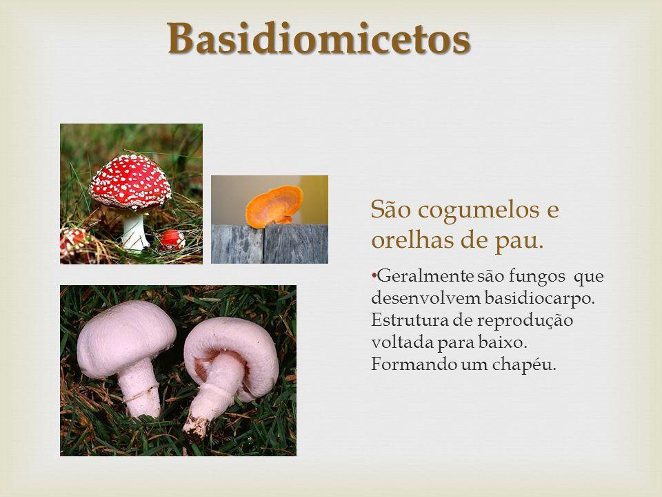 São cogumelos e orelhas de pau.
