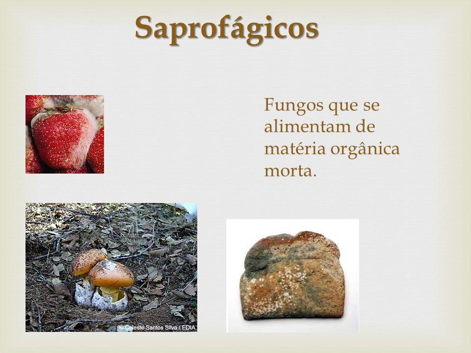 Fungos que se alimentam de matéria orgânica morta.